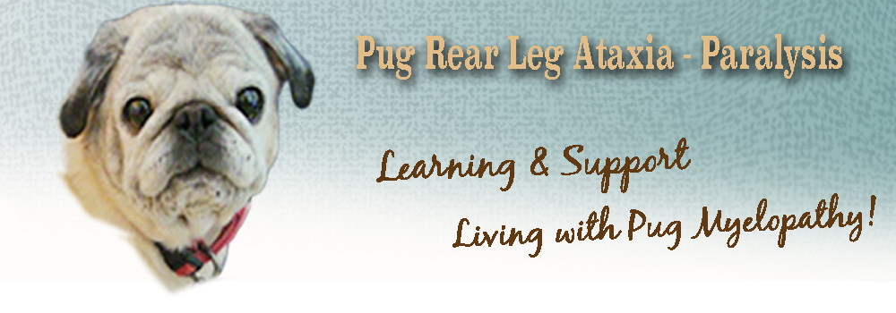 Pug Rear Leg Ataxia Paralysis